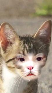 猫,目,アプリ