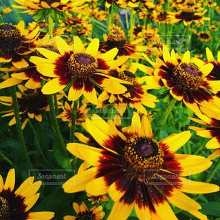 黄色の写真・画像素材[604807]