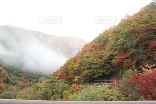 秋,紅葉,屋外,樹木,ドライブ,秋空