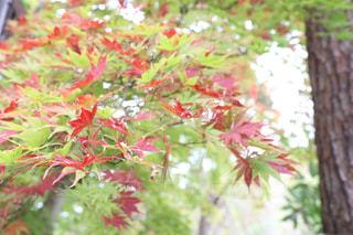 紅葉,屋外,赤,樹木,秋空
