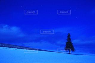 クリスマスツリーの写真・画像素材[914315]