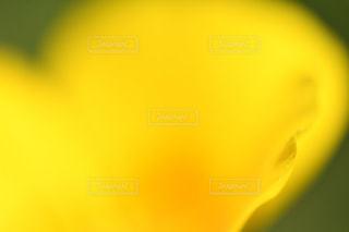花の写真・画像素材[606108]