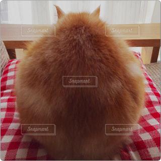テーブルの上に座って猫の写真・画像素材[726188]