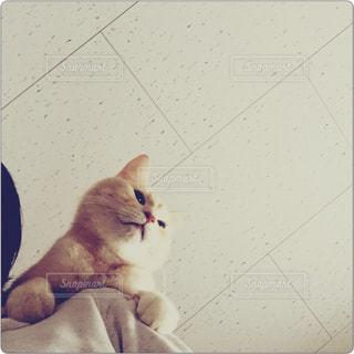 互いの上に座っている猫の写真・画像素材[726201]