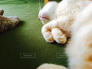 地面に横になっている猫の写真・画像素材[726256]
