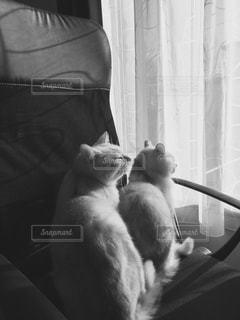 ソファに座って猫の写真・画像素材[813278]