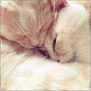 猫の写真・画像素材[834823]