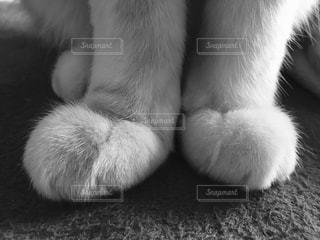 猫の写真・画像素材[839883]