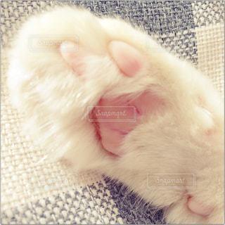 毛布の上で眠っている猫の写真・画像素材[848669]