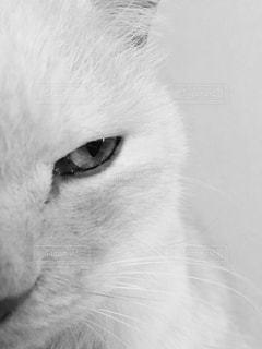 猫のアップの写真・画像素材[973173]