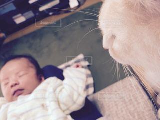 猫と赤ちゃんの写真・画像素材[1038028]