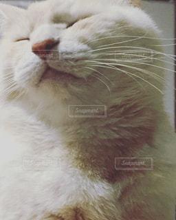 幸せ寝顔の猫のアップの写真・画像素材[1138698]