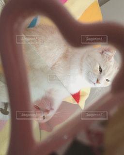 近くに猫のアップの写真・画像素材[1144323]
