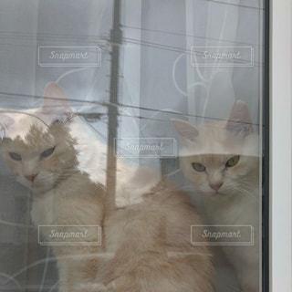 ウィンドウの横に座っている猫の写真・画像素材[1268589]