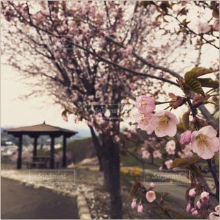 木の花の花瓶の写真・画像素材[1413050]