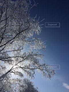 空,冬,木,雪,白,北海道,スキー場,ホワイト,網走
