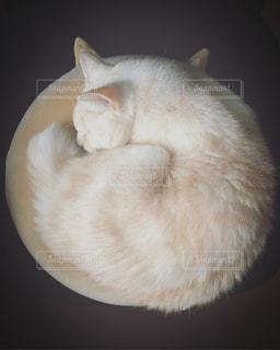 猫,茶色,お昼寝,ベージュ,座布団,ミルクティー色,円座クッション,フィット感
