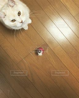 遊んでくれるのをまっている猫の写真・画像素材[2305827]