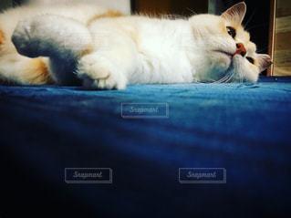リビングに横たわる猫の写真・画像素材[2320356]