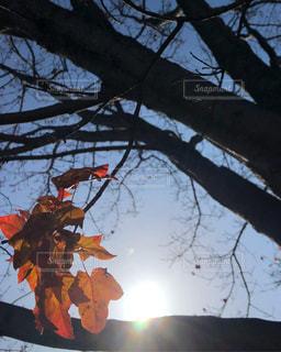秋の終わりの写真・画像素材[2513662]