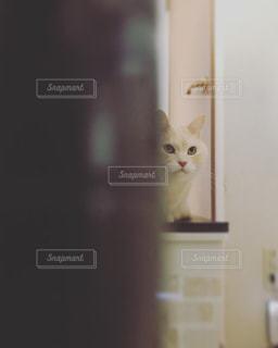 白い壁の上に座っている猫の写真・画像素材[2700723]