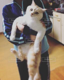 娘に抱っこされている猫の写真・画像素材[2989381]
