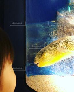 泳ぐ魚とご挨拶の写真・画像素材[3121729]