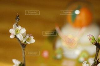 新春の写真・画像素材[4042917]