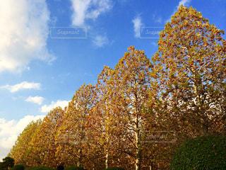 空,秋,紅葉,秋空,新宿御苑