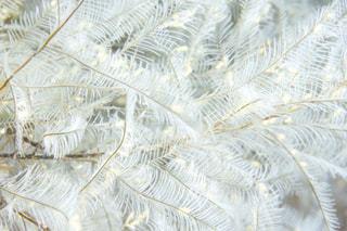 海,植物,白,ふわふわ,ホワイト,ホワイトカラー