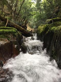 自然,綺麗,川,景色,福岡県
