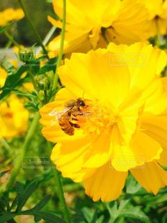 黄色の写真・画像素材[610014]