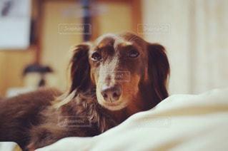 犬の写真・画像素材[18122]
