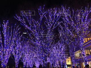 夜景,ライトアップ,クリスマス,みなとみらい