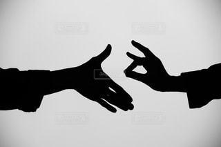 握手拒否ぎつねの写真・画像素材[751916]