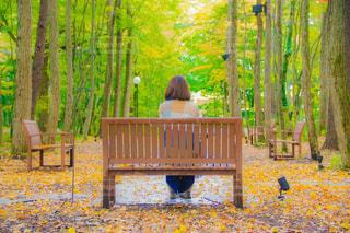 森林の隣に座っている木製のベンチの写真・画像素材[772603]