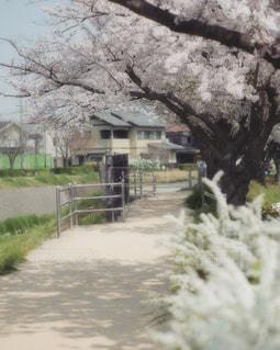 花愛でる道の写真・画像素材[1155947]