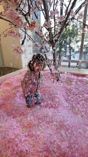 桜,花見,花びら,桜プール