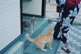 猫の写真・画像素材[680119]