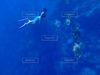 海,魚,水着,ダイビング,小笠原