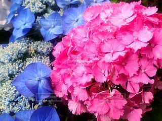 花,flower,6月,JUNE,no people
