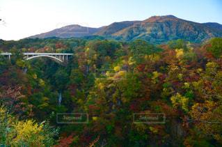 背景の山と木 - No.841505