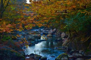 森の中の滝 - No.868601