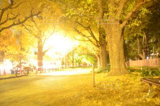 道の真ん中にツリー - No.878835