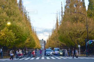 ツリー横の通りを歩く人々 のグループ - No.878839