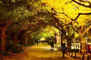 道の真ん中にツリー - No.880275