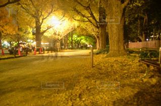 道の真ん中にツリー - No.880278