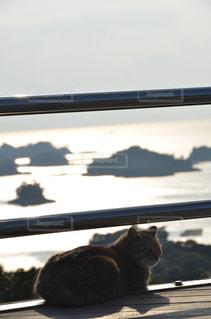 窓の前に座っている猫 - No.1053610