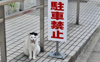 駐禁見張るネコの写真・画像素材[1257089]