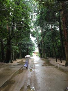 雨,傘,森,神社,梅雨